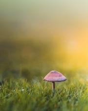 0474 Lorraine Morris Palmerstown CC Mushroom Delight SILVER - Non Advanced