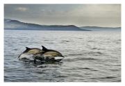Advanced - Winner - Patrick Kavanagh - Dolphins in the Bay - Palmerstown Camera Club