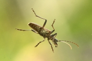 Projected Nat World - Non-Advanced Honourable Mention - Heather Rice - Weevil - Mountrath & District Camera Club
