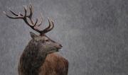 Projected Open - Advanced Bronze - Christine Taylor - Its raining again - Celbridge Camera Club