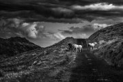 Non Advanced Gold - Conor McEneaney - Dundalk Photographic Society - Cooley Mountain Wild Horses