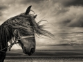 Non Advanced HM - Conor McEneaney - Dundalk Photographic Society - Bad Hair Day
