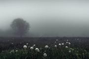 Colour Print Theme - Advanced Honourable Mention - Mark Gorman - Dandelion Mist - Blarney Photography Club