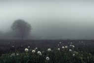 Colour Print Theme - Advanced Honourable Mention - Mark Gorman - Dandelion Mist - Blarney Photography Club