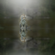 Projected Open - Non-Advanced Gold - Sharon Rankin - Staring At MyOwn Reflection - Portlaoise Camera Club
