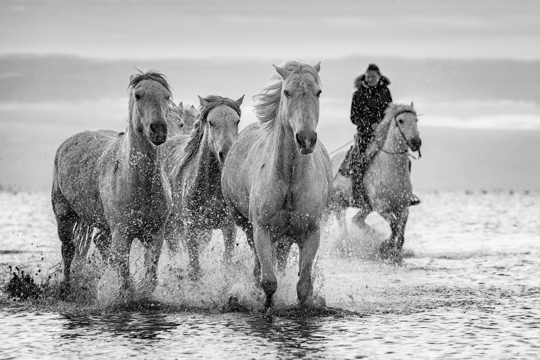 1234_Mp1_Carmarge-Horses_2_Non-Advanced