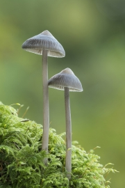 Eddie Kelly - Two Stools - Ballincollig Camera Club - Projected Image Open - Intermediate Honourable Mention.jpg