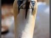 118_Durty-Bird
