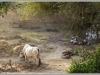 123_Mandawa-Farmyard-India