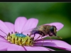 137_Bee