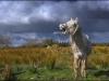 149_Singing-Horse