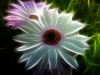 156_Rebel-Flowers
