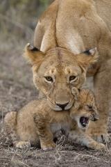 Careful Mother