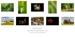 Emma Flood, LIPF, Portarlington Photography Club