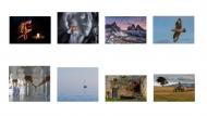 8.-WICKLOW-PHOTOGRAPHY-CLUB_Shield-2019