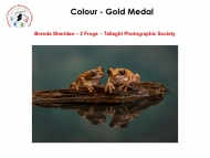 18.-Individual-Colour-Gold-Medal