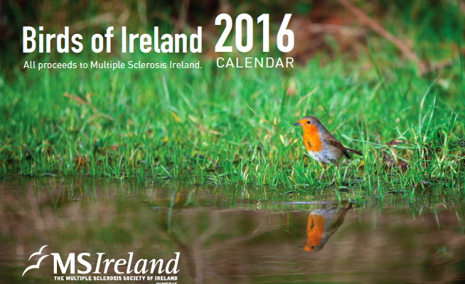 Multiple Sclerosis Calendar Competition 2016 – Results