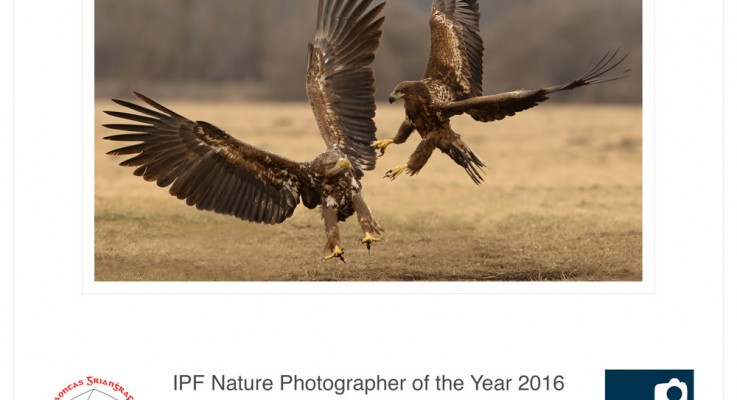 IPF Nature Photographer of the Year 2016 – Results!