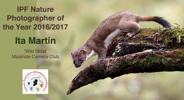 IPF Nature Photographer of the Year 2017 – Results!