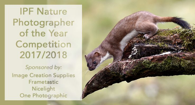 IPF Nature Photographer of the Year 2017/2018 – Open for Entries